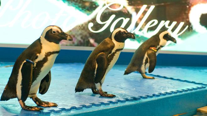 ペンギンのいるバーTOP