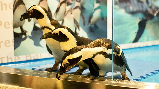 ペンギンのいるバー1